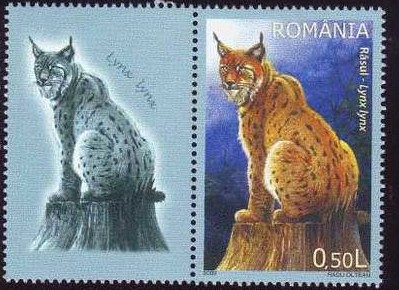 Romania Wild Cats